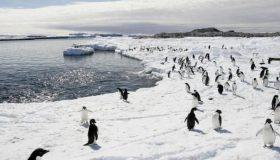 Βρήκαν αποικία με 1,5 εκατ. πιγκουίνους (video)