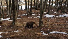 Ξύπνησαν οι αρκούδες!