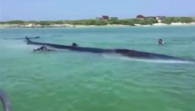 Διάσωση φάλαινας στον κόλπο του Μεξικού (video)